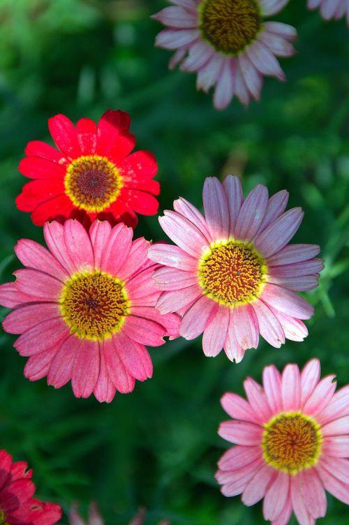 flower summer flower petal