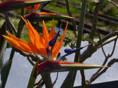flower close caudata greenhouse