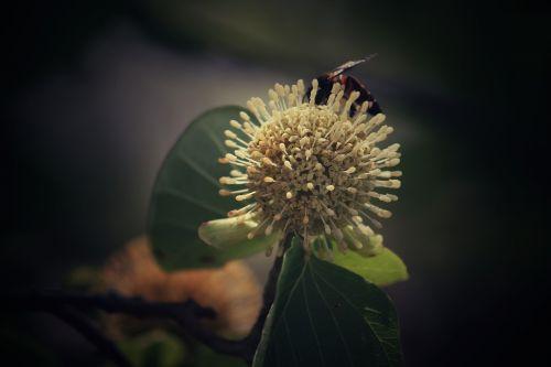 flower housefly bee