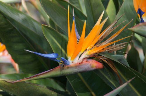 flower orange caudata greenhouse