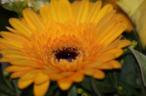 flower flowers macro