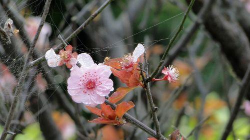 flower yu lee spring