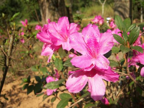 flower flowers delicacy