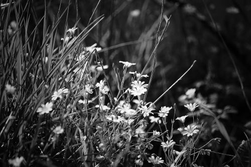 flower nature blossom