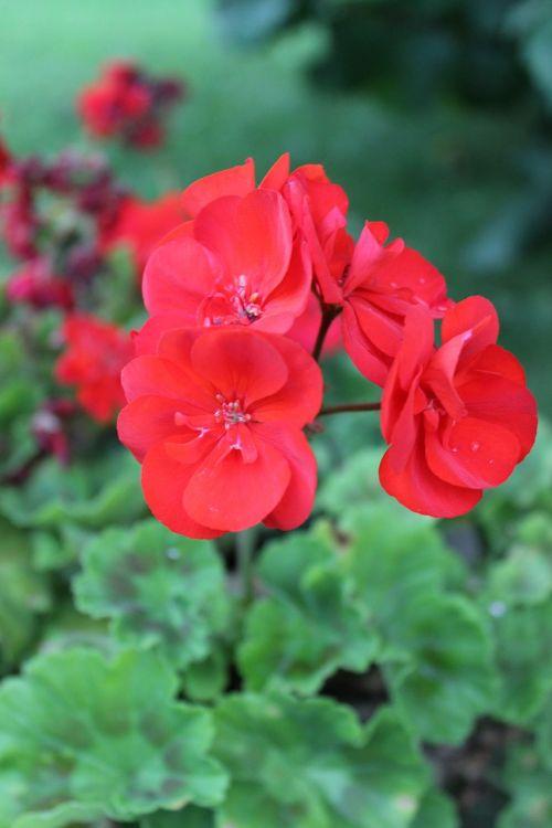 flower pink garden