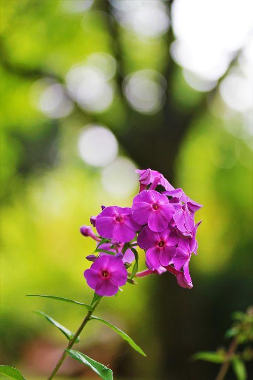 flower garden blossom