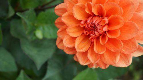 flower orange summer