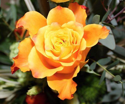 flower orange yellow