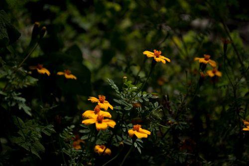 flower wild field