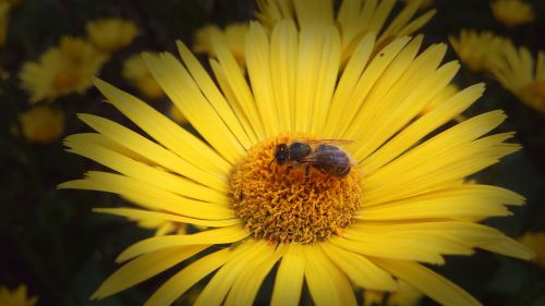 flower photo bee