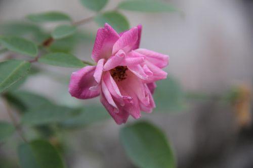 flower springtime bloomed anew