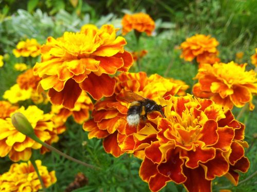 flower nature yellow