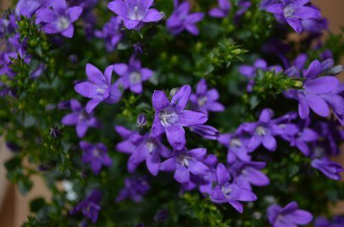 flower flowers plant
