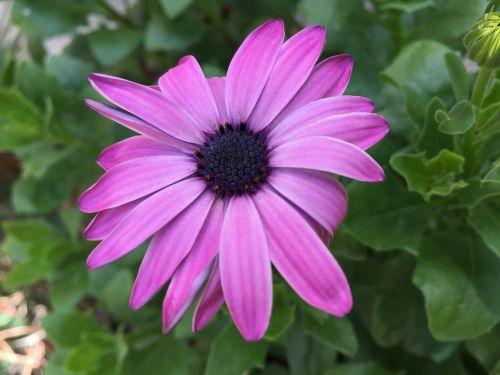 flower garden purple flowers