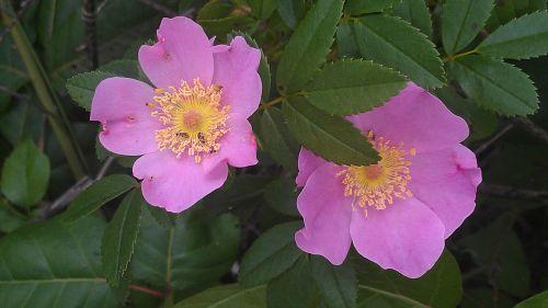 flower pretty purple flower