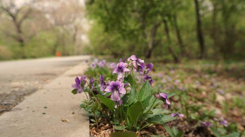 flower roadside woods