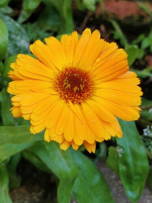 flower summer yellow