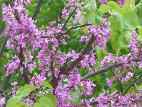 flower tree flower tree