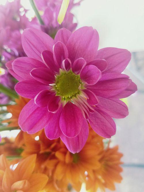 flower pink flower flor