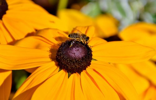 flower sun hat bee