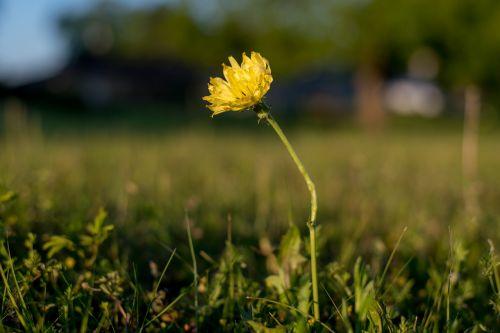 flower morning yellow