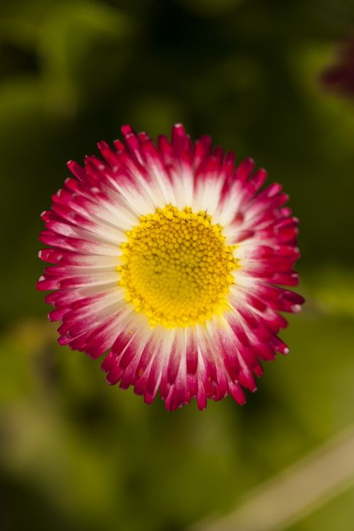 flower plant flowers