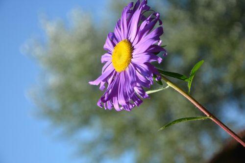 flower profile of flower yellow