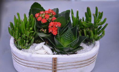 flower floral composition flowers fat