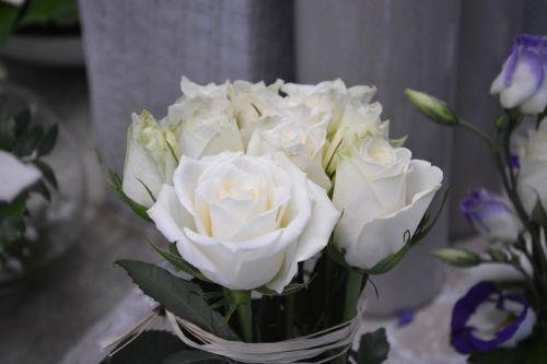 flower white roses nature