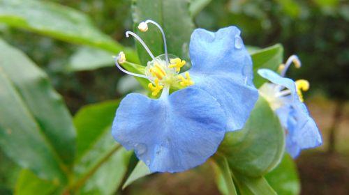 flower blue green