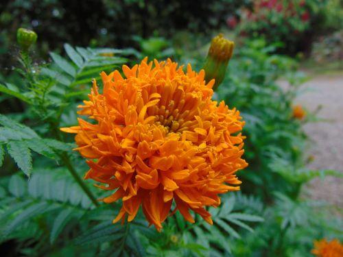 flower orange yellow flower
