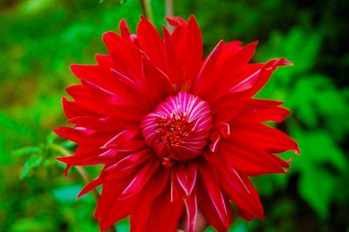 flower nature sri lanka