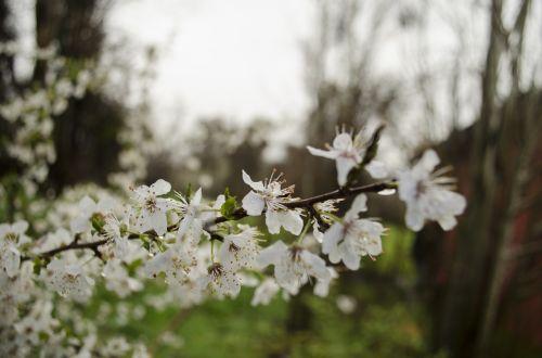 flower rain beauty