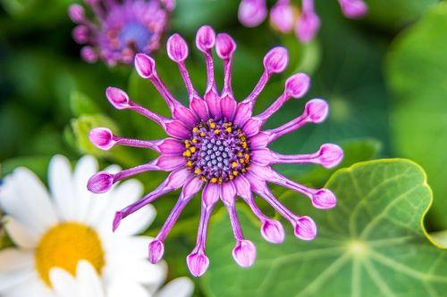 flower loud circular