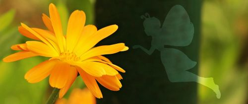 flower butterfly female