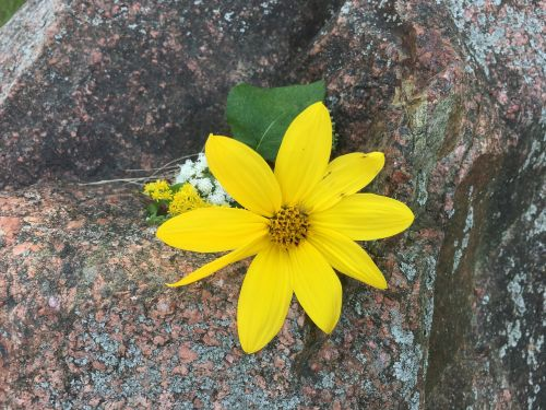 flower yellow floral