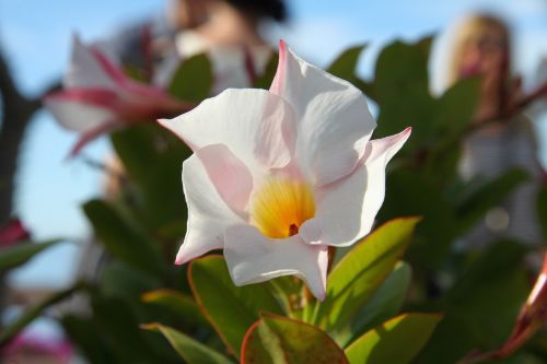flower swamis spirituality
