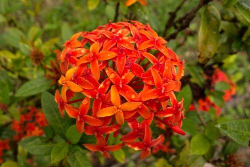flower macro orange