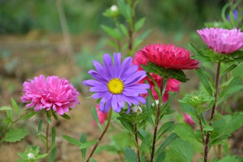 flower flowers bouquet