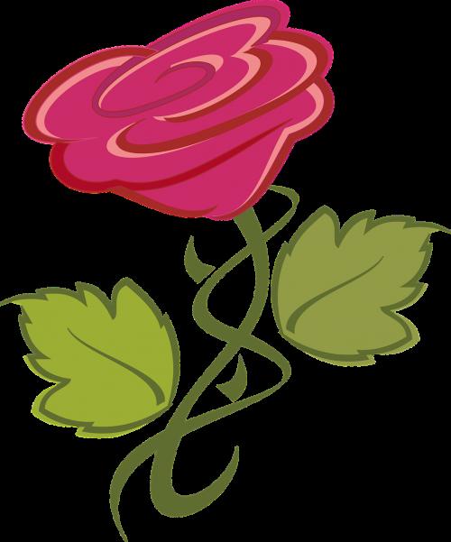 flower rose nature