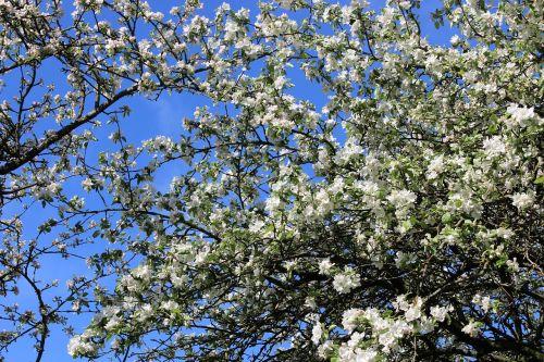 flower nature tree