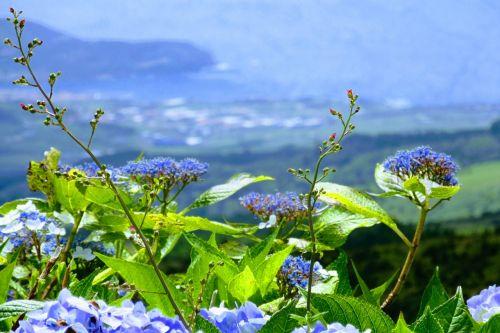 flower sky azores