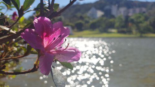 flower lake sol