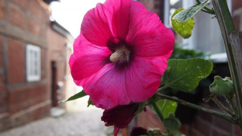 flower alley plant