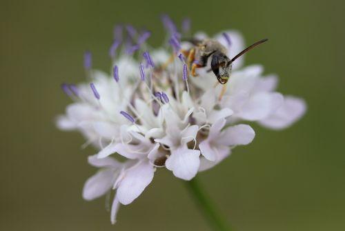 flower white wasp