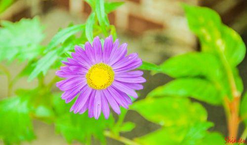 flower violet wildflowers