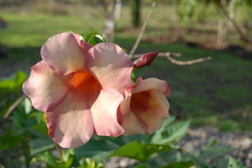 flower wild botany