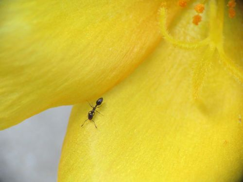 flower tiny bloom tiny ant
