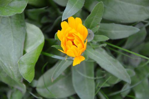 flower color orange blossomed