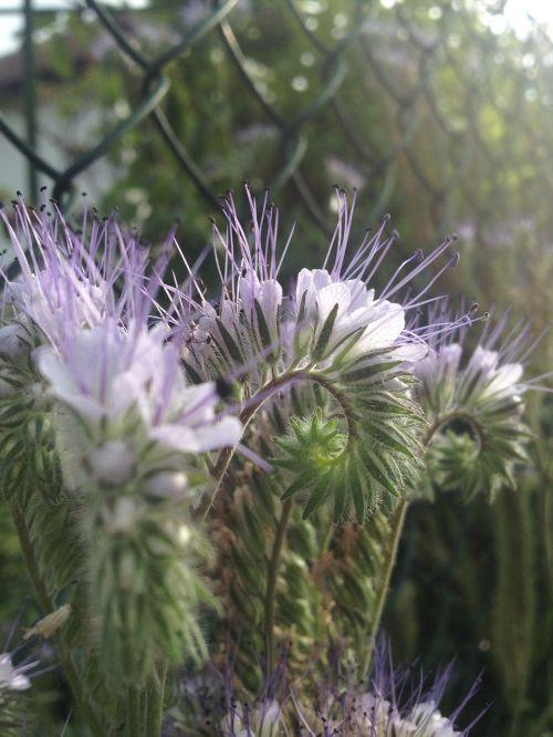 flower purple filigree